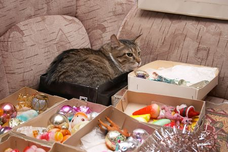 trumpery: This cat very like any boxes... During decoration christmas tree. Stock Photo