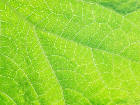 キュウリ葉の構造