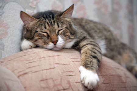 Cat sleeping by sofa. Kuzia - senior cat (12 y.o.)