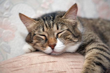 oversee: Cat sleeping by sofa. Kuzia - senior cat (12 y.o.)