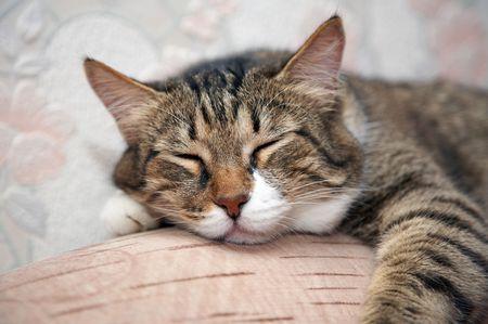 Kat slaapt door sofa. Kuzia - senior kat (12 jaar)