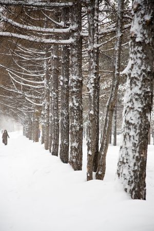 novosibirsk: Snowstorm. City park of Novosibirsk, Siberia. December 2006