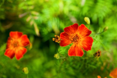 vibrant colours: Summer flowers. Green and red vibrant colours.