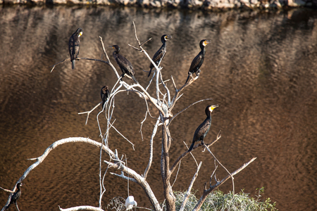 Birds sit on a dry tree