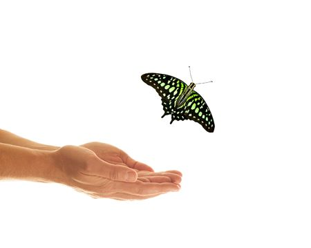 Butterfly & Human Hand on white background