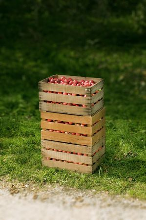 red organic apples in a box