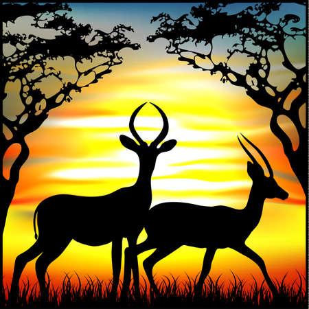 gazelle: gazelle Illustration