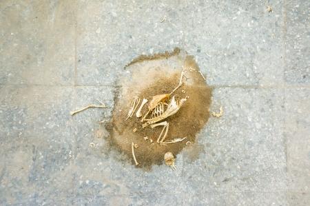 mummified: dead bird on floor Stock Photo