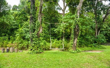 Rope swing in the garden  photo