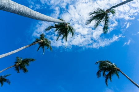 Coconut with blue sky background. photo
