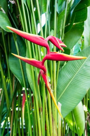 bird of paradise flower in the park photo