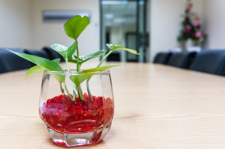 trees in small glass pots on table photo