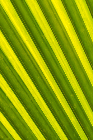 Leaves of coconut trees - Close up photo