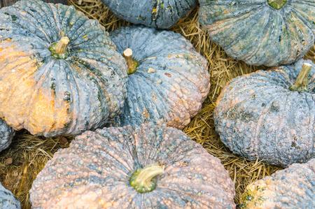 hayride: Beautiful pumpkin display on a haystack