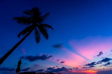 coconut tree with Sunset silhouetteand umbera photo