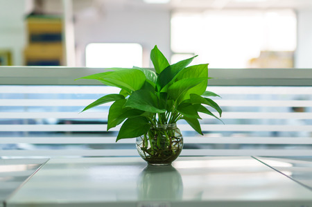 Plants in vases on table at office area photo
