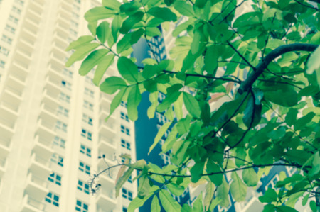 residential building: under the leaf of Lettuce tree, background with Residential building, green for relax Stock Photo