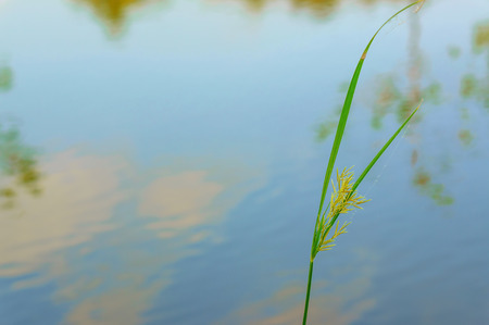 bank branch: close up of the grass with water background, view for relaxing, Spring landscape