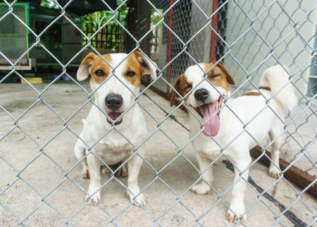 protruding eyes: puppy dog in the cage, protruding tongue, eyes closed in a cage.