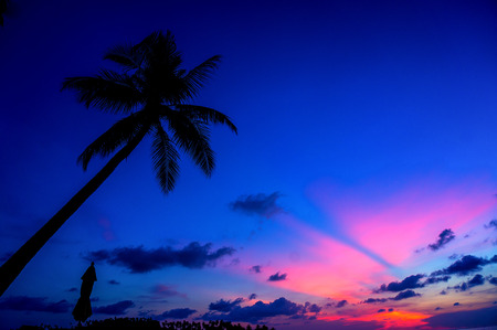 coconut tree with Sunset silhouette and umbrella Stock Photo
