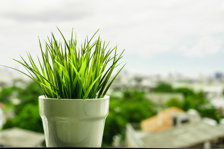 Green organic wheat grass against , cityscape background Stock Photo