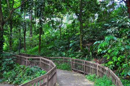 serene: A serene and peaceful forested trail in Bukit Timah nature reserve (Singapore)