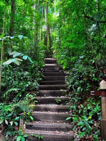 jungle green: A serene and peaceful upwards stairway in Bukit Timah nature reserve