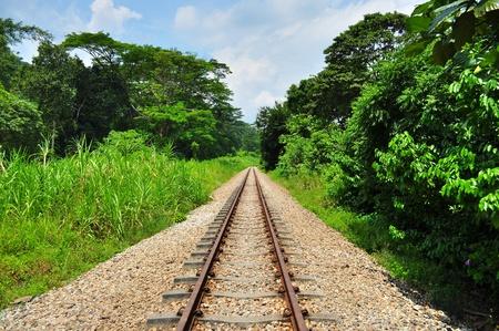 bukit: Scenery of lush greenery with train railway under the sunny blue sky