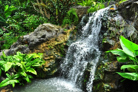 Wasserfall auf dem Felsen am Botanischen Garten (Singapur) mit Grün Standard-Bild