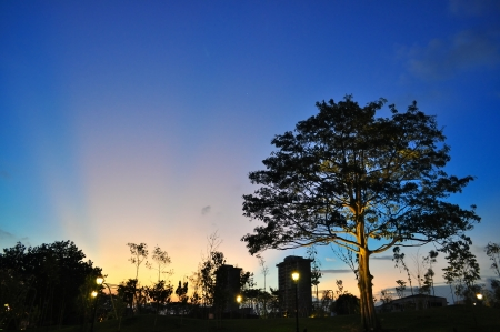 blazes: Yellow ray of sunset blazes through blue evening sky with tree on the foreground Stock Photo