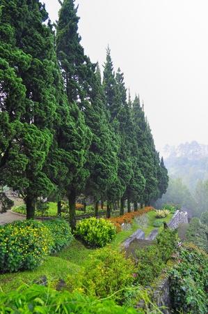 mountainous: Beautiful garden with trees in cool mountainous area in Lembang Stock Photo