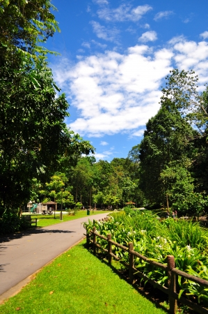 bukit: Bukit Batok nature park - Singapore - on a sunny day Stock Photo