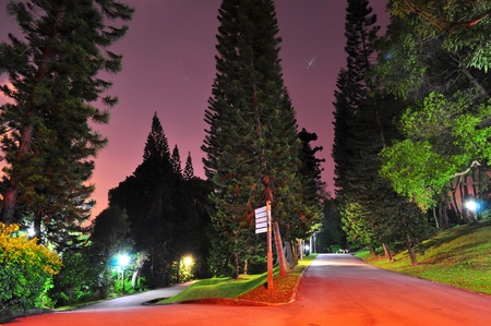kent: Diverging walkways surrounded by tall trees in Kent Ridge park, Singapore, by night