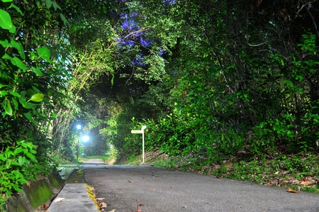 ang: walkway surrounded by lush greenery in the evening Ang Mo Kio Town Garden, Singapore