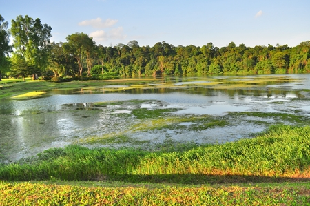 greenery: Macritchie reservoir with greenery and many plants on the water Stock Photo