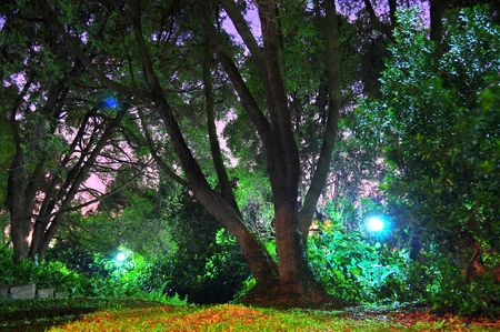 kent: greenery at night with pink and purple sky background at Kent Ridge Park Singapore