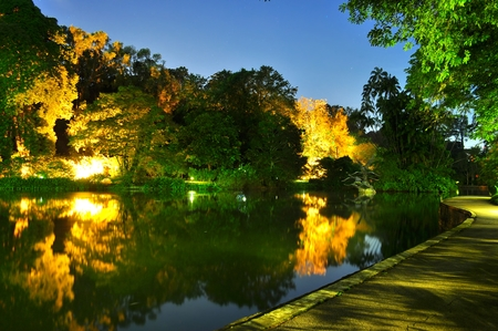 lightings: Lighting effect on trees by a pond at Singapore botanical garden by night