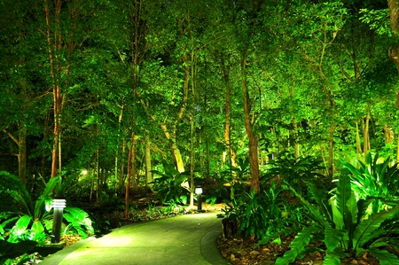 walkway: A walkway surrounded by illuminated trees at Singapore Botanical Garden by night Stock Photo