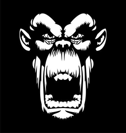 gorila: Cara blanca del gorila