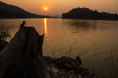 arboles secos: �rboles muertos cerca del lago Foto de archivo