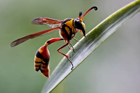 A bee begins its daily activity by actively looking for food.