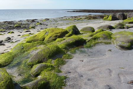Ocean shore with stones covered with bright green moss during low tide, Sandgerdi, Gardur, Reykjanes Peninsula, Iceland
