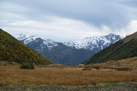 Mountain landscape with wooden shepherds hut and grazing horses in valley and Maphkrani Mountain Range in background. During trekking to Khalde glacier. Greater Caucasus, Svaneti, Georgia 版權商用圖片