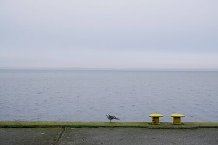 Two yellow mooring bollards and lonely seagull on empty dock by the lake off season in misty day. Kamien Pomorski, Poland