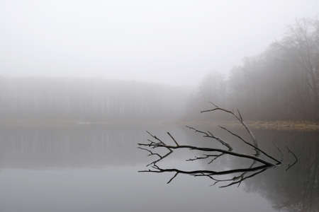 Moody misty landscape of lake with amazing effect of reflection of branches immersed in calm surface of water. Otomin Lake, Kashubia, Poland