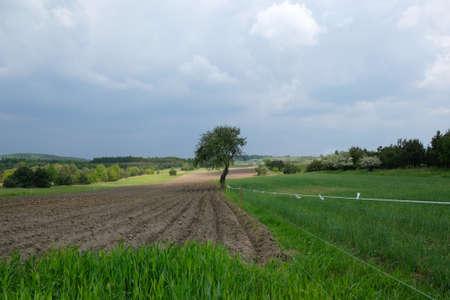 Lonely tree on spring fields. Fields overgrown green young grain. Furrows on a plowed field in spring season. Krakow-Czestochowa Upland, Silesia, Poland