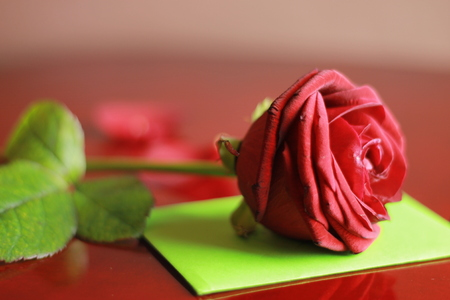 Red rose with green envelope 写真素材