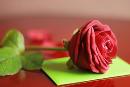 Red rose with green envelope Stok Fotoğraf