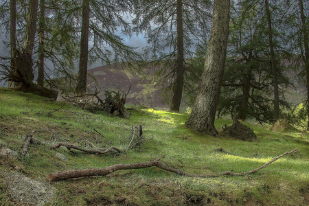 Forest in the mountains. Track in Cairngorms National Park. Angus, Scotland, UK Stock Photo