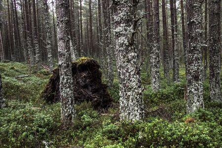 Forest in Ballater, Aberdeenshire, Scotland, UK. Cairngorms National Park. Stok Fotoğraf